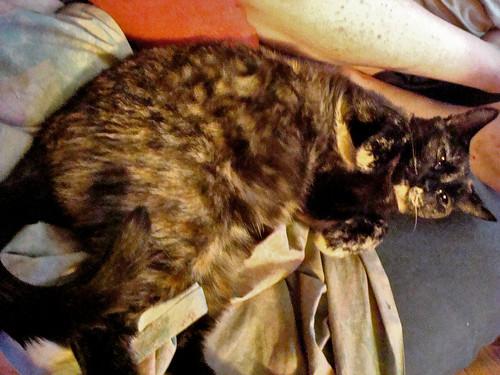 Moni's Fuzzy Belly