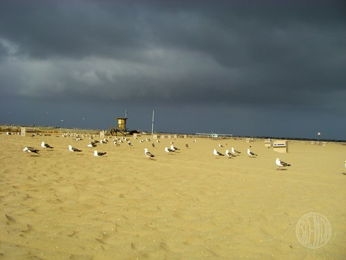 seaguls aren't afraid of storms