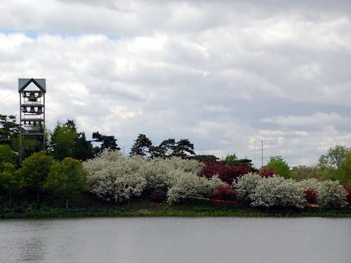 Spring trees in bloom 2