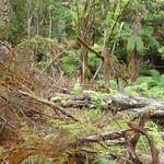 RotoruaWai-O-Tapu070 thumbnail