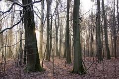 *** (pszcz9) Tags: las forest forestimages mgła mist drzewo tree słońce sun grudzień december pejzaż landscape beautifulearth sony a77