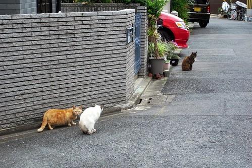 Today's Cat@20090517