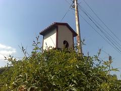 06102007694 (KHALID BASHIR AHMAD) Tags: kashmir khalid