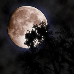 Beautiful Moon Tonight... (SingleDadLaughing) Tags: blue moon tree beautiful silhouette lune space satellite branches interestingness1 full craters crat