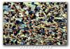 Red-Winged Black Birds! (Nikographer [Jon]) Tags: bird birds animal animals lenstagged md bravo december wildlife maryland easternshore dec national nikkor blackwater 2007 refuge nationalwildliferefuge redwingedblackbirds nwr redwingedblackbird iso1250 80400mmf4556dvr rwbb marylandseasternshore blackwaterrefuge autoiso blackwaternationalwildliferefuge avianexcellence bnwr bestnaturetnc07 20071208d200116446 pluscompensation jss20081 imagesforblog1
