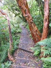 IMG_4057 (kenorrha) Tags: newzealand nznorthisland scenicsnotjustlandscapes