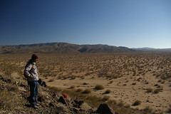 Peter surveys infinite Joshua Trees