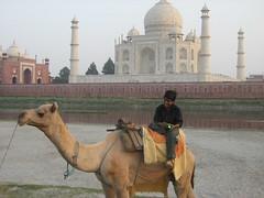 Camel and Taj Mahal