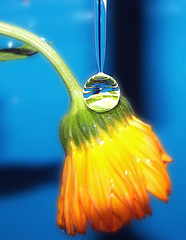 drop..-)) (aycasan) Tags: blue flower macro turkey trkiye drop iek turkei damla aplusphoto diamondclassphotographer aycasan