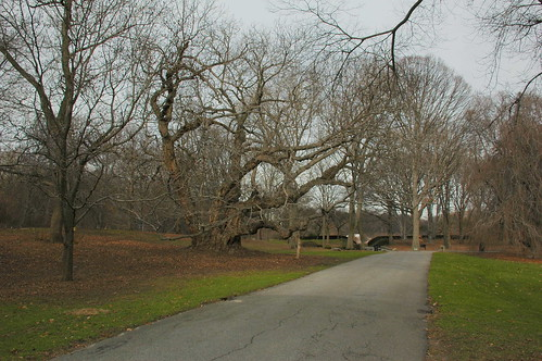 Path to Oak Circle, Brooklyn Botanic Garden