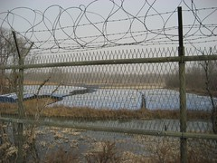 ginseng farms behind the barbed wire