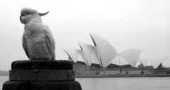 Best seat in the house (kees straver (will be back online soon friends)) Tags: portrait bw bird architecture bigbird sydney posing australia operahouse anawesomeshot keesstraver