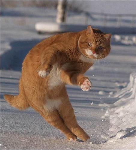 CatSkiing