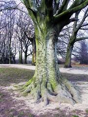 Equalised Tree