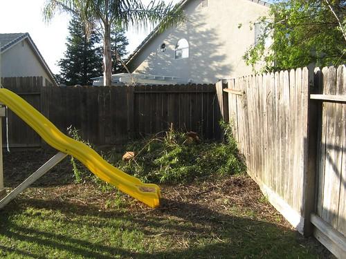 backyard 009