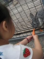 20080410-餵兔子-15