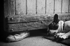 Bloque porte (koni_94) Tags: door bw dog chien white black french dj noir bull nb pirate porte blanc francais caille bouledogue paillasson