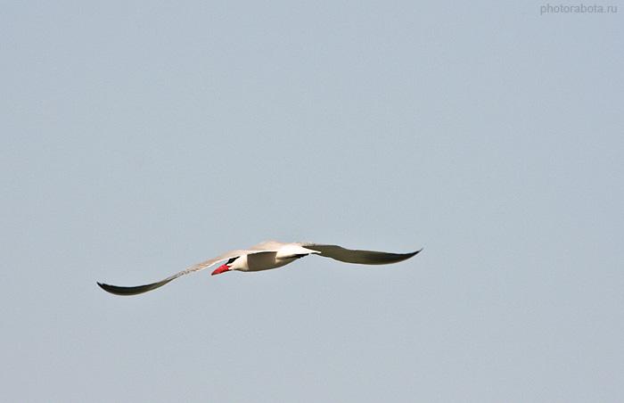 Линии крыльев