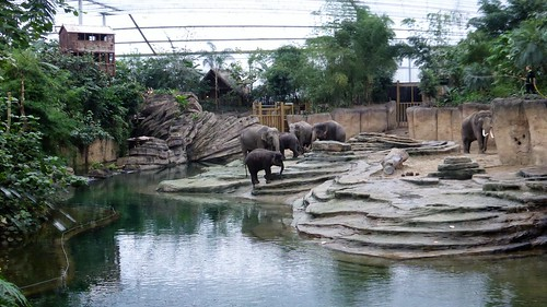 Elephants at Wildlands, Emmen