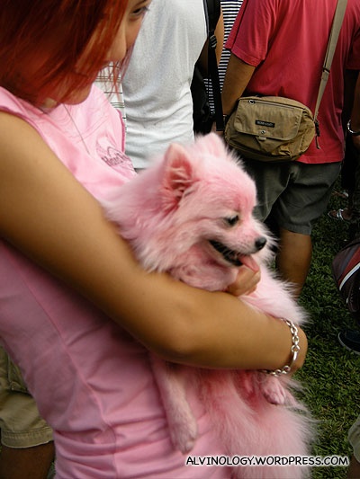 Another picture of the shocking pink dog