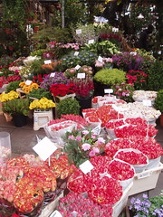 Bloemenmarkt Blumen