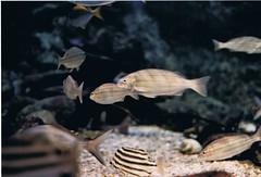 Fishies in the water, fishies in the sea (K e l l i) Tags: fish film water aquarium sydney australia