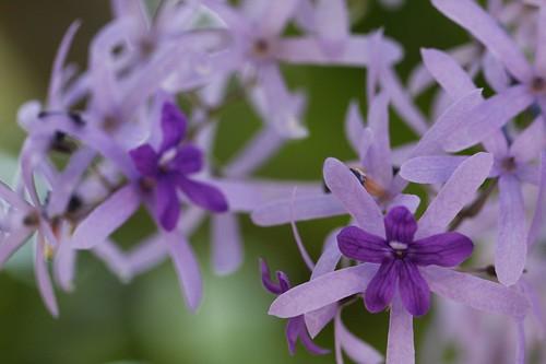 可憐に咲いた花 / Beautiful color