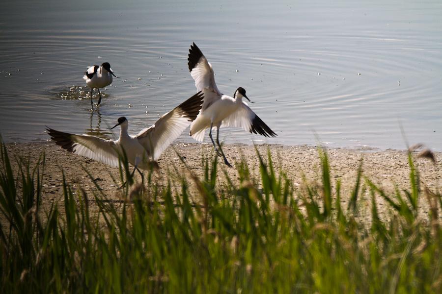 WK en Baie de Somme le 20, 21 et 22 Mai 2011 : Les photos - Page 3 5767996703_2f2bdc8878_o