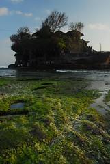 Bali 2007 - Tanah Lot(4)