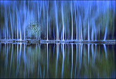 Blurry Blues (Mandana (on and off)) Tags: blue trees abstract water photoshop cool blurry bravo digitalart creative explore motionblur dreamy trunks frontpage bluehue themoulinrouge selectiveblur magicdonkey xoxoxoxoxox artlibre aplusphoto infinestyle reflectionforest