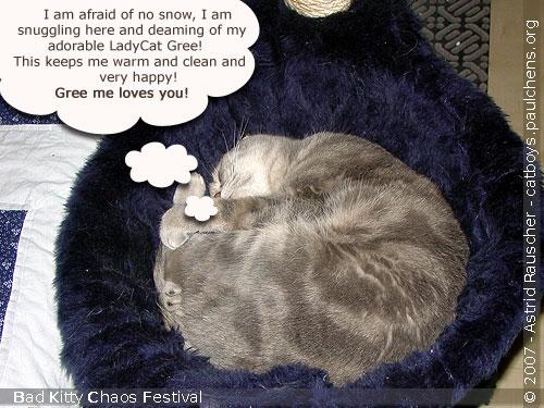 Bad Kitty Cat Festival Of Chaos No.18 - 06