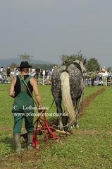 _LE72365 (Lothar Lenz) Tags: horse caballo cheval cavalo pferd hest equus paard detmold hst feldarbeit hestur pflug kaltblut pflgen konj hobu zirgs landwirtschaftlichesgert lotharlenz freilichtmuseumdetmold pferdestark07 pferdestark2007