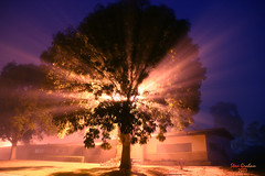 night tree (artfilmusic) Tags: light tree fog night