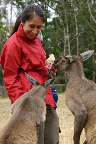 Gimme some! Carolyne + Red Kangaroo. Cleland Cons. Park.