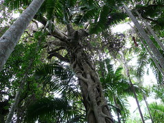 Dense Foilage (phempsall) Tags: sea rainforest australia boardwalk acres portmacquarie seaacres