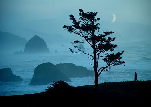 ocean's lament