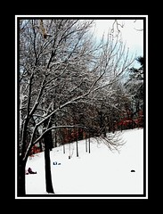 Winter Feeling! (RajRem) Tags: park flowers blue trees winter girls boy sea vacation plants sun white lake snow tree art beach nature boys water girl smile grass rain boston stone kids photoshop canon river garden relax landscape ma photography pond exposure flickr pretty shot image photos top contemporary massachusetts fineart scenic newengland photographers stormy bluesky drop peoples melrose smiley enjoy beaches tropical mass topic medford malden bostonist snowtree snowtrees sici fallsway mywinners aplusphoto massachusettslife diamondclassphotographer betterthangood