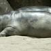 San Diego Zoo 010