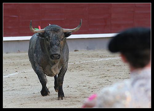 Toro de Adolfo Martín