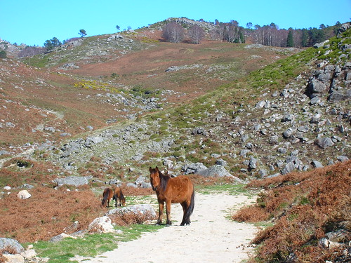 wild horses in Peneda-Gerês National Park
