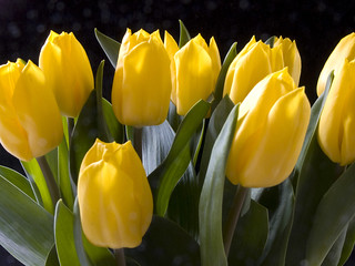 Frühlingsblumen / Flowers of spring