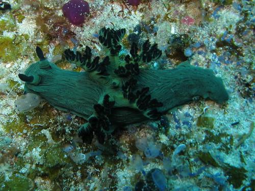 bohol diving