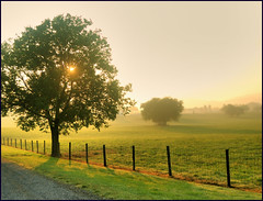 (Cliff Michaels) Tags: photoshop d50 landscape dawn nikon michaels blountcounty capturenx tennpenny photoscliff