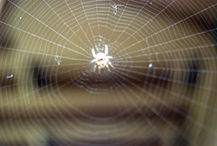 spider is artist (SusanCK) Tags: spider artwork spidersartwork susancksphoto