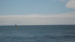 Sailing Santa Cruz IMG_1378.JPG Photo