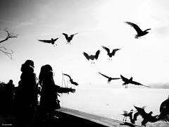 Feeding the wild animals (René Mollet) Tags: cold sunny animal wild seagulls zürich zürichsee blackandwhite bw girl monchrom monochromphotographie monochrom street streetphotography shadow silhouette renémollet zuiko penf