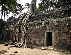 When a Temple is Forgotten (Stuck in Customs) Tags: old trees art beautiful composition fun temple photography amazing cool intense scary ancient nikon cambodia shoot artist photographer shot angle image superb stones unique buddha background gorgeous d2x picture angkorwat haunted seeds forgotten monks edge processing stunning horror pro resolution framing portfolio lovely tunes capture scare fears emotions ta civilisation tombs banyan buddhists treatment prohm stuckincustoms runks treyratcliff lucisart6