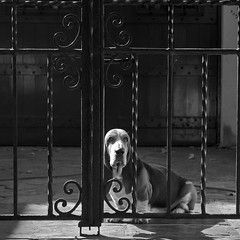 Sad dog (Natalia Romay Photography) Tags: door urban bw dog argentina argentine canon square puerta buenosaires alone sad sweet can bn perro portal soledad olivos mascota américalatina saddog guardián mywinners