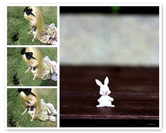 """""""Did you see that?... Dolly Diptych Weekly 17/52"""