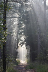 The youngest day (taka_itaha) Tags: morning sunlight mist nature netherlands haze earlymorning nederland natuur sunbeam beams veluwe sunray zandverstuiving naturesfinest wekeromsezand img5248